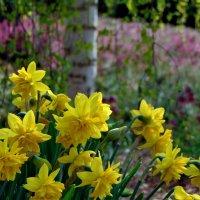 Весна в саду :: spm62 Baiakhcheva Svetlana