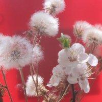 Цветут одуванчики... :: Алекс Аро Аро