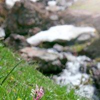 Весна в горах. :: Виталий