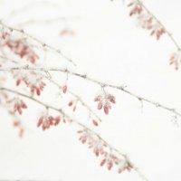 снежная карамель :: Мари B