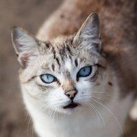 Эти глаза напротив... :: Svetlana