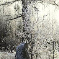Утро в зимнем лесу :: Сергей Шаврин