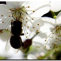 из  жизни  насекомых ! :: Ivana