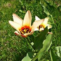 Динамика расцвета! (день четвертый) :: Надежда