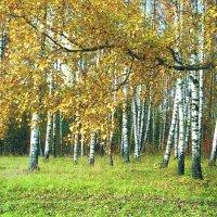 Осенний наряд :: Pjotrs Murāns