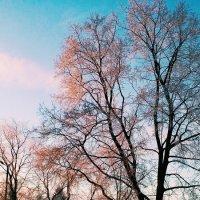 утро, мороз)) :: ~К а р е г л а з а я~