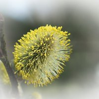Апрель :: Swetlana V