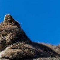 Я на солнышке лежу! :: Сергей Sha