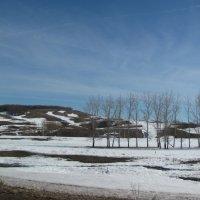 Ещё в полях белеет снег... :: Наталья Кочетова