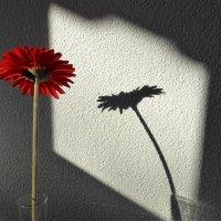 Этюд с красным цветком :: Nata_li В.