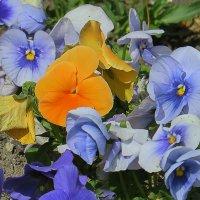 Цветы :: Валерий Дворников