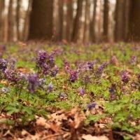 Просто весна.. :: Ирина Сивовол