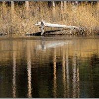 Крокодилы на Пре :: Михаил Розенберг