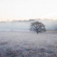 утро туманное... :: Ira Oleynik