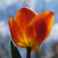 немного весны и красоты :: Gal` ka