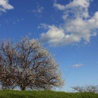 Апрельский денек :: оксана косатенко