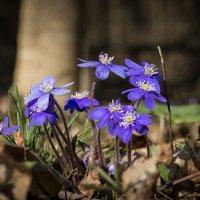 Весна пришла! :: Олег Козлов
