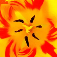 весеннее завихрение :: Света Ли