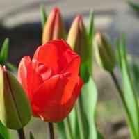 Душевной радости цветенье :: Татьяна Смоляниченко