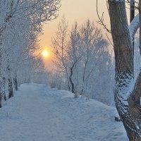 Деревья спят и холодное солнце января подсвечивает сны :: Екатерина Торганская