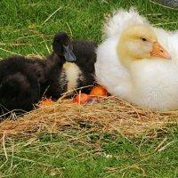 У пасхальных яиц :: Alexander Andronik