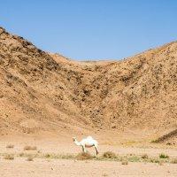 в пустыне :: Лариса Батурова