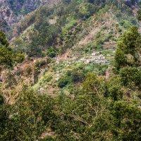 Мадейра. Долина монахинь. :: Тиша