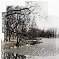 Весенний парк :: Galina Belugina