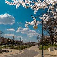 Весна :: Василий Дудин
