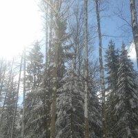 Снег в апреле :: Сапсан