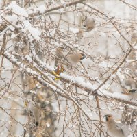Птицы и апрельский снег :: Марина Кириллова