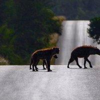 Abbey road :: Roman Mordashev