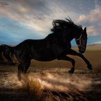 ветер.... :: Виктор Перякин