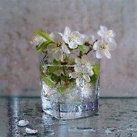 Прозрачной свежести полна Весна - сверкающая чаша! :: Людмила Богданова (Скачко)