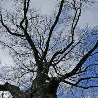 дерево :: Света Ли
