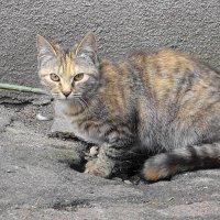 Кошка, гуляющая сама по себе... :: Маргарита Батырева
