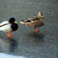 Хождение по льду... :: Владимир однакО...