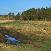 Лесные подсыхают луговины... :: Лесо-Вед (Баранов)