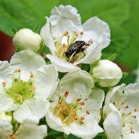 Весна... цветение... :: Светлана