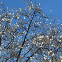 Взгляни на небо, там бабочки порхают :: Татьяна