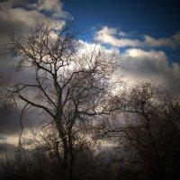 Небо и деревья :: Павел Зюзин