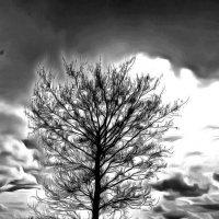 Что-то хмурится погодка.... :: Tatiana Markova