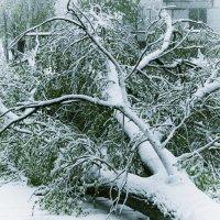 под тяжестью Апрельского снега :: Любовь Потравных
