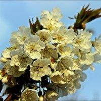 Очарование весны :: Татьяна Пальчикова