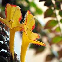 сладкая парочка или цветы на подоконнике :: Олег Лукьянов
