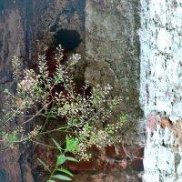 Травинки на фоне кирпичной стены :: Денис Масленников