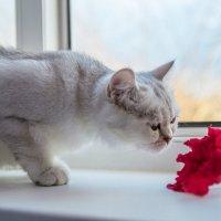 кошка :: Ольга Кошевая