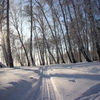 Зимняя тропа :: Александр Севастьянов
