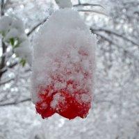 Аномалии весны :: Nina Streapan