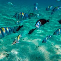 коралловые рыбки :: Лариса Батурова